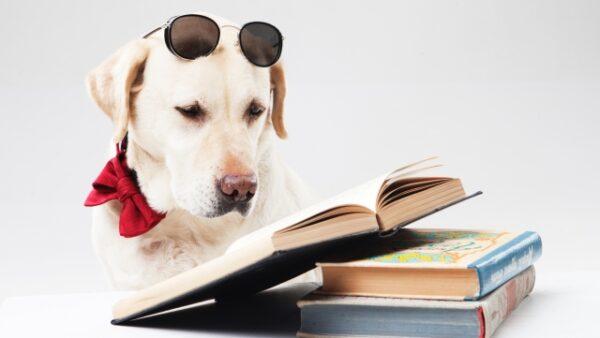 【読み】本をたくさん読むだけではNG